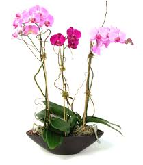 boca raton florist florist davie flower shop boca raton local florist palmetto