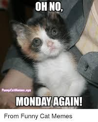 Grumpy Cat Monday Meme - 25 best memes about grumpy cat grumpy cat memes