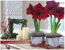 winter blooming bulbs inspiration book