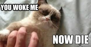 Sleeping Cat Meme - now die you woke me sleeping grumpy cat quickmeme