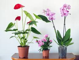 House Plants by Mood Altering And Calming Effects Of House Plants Clutter Healing