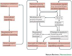 3 12 179 individual master gephyrin a master regulator of neuronal function nature
