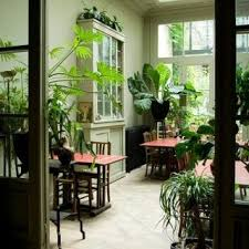 beautiful house plants house plants green things green things