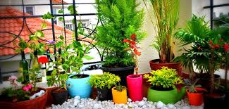plants at home growing beautiful plants indoors home tweaks