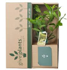 give plants for any occasion from corporate gifts to birthday