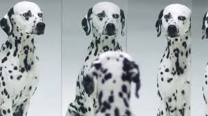 dalmatians front adorable skin cancer prevention ad
