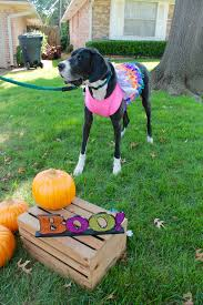 quick and easy dog halloween costume