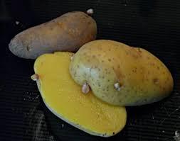 patate en robe de chambre patates et pommes de terre histoire et expressions coop icem