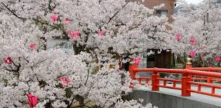 springtime in japan is fabulous only in japan