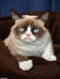 Image 9 Best Grumpy Cat - how is grumpy cat the best cat 2018