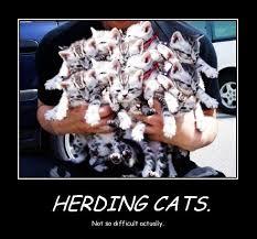 Herding Cats Meme - cat herding bluejayblog
