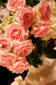 ashland flowers in ashland pamgarrison