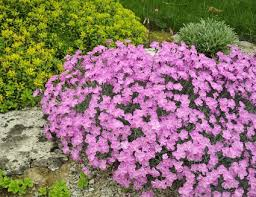 Pictures Of Rock Gardens Landscaping How To Build Rock Gardens Photo Tutorial