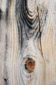 Beautiful Texture Beautiful Texture Of Cracked And Knotty Wood Starting To Get