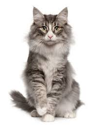Hit The Floor Meaning - seven things that make sense to your cat u2026 but not to you