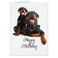 rottweiler puppy birthday greeting cards zazzle