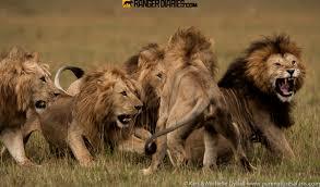 africa u0027s u201cgreat work u201d the wild heart of africa u2013 national