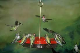 Jewel Box Window Hummingbird Feeder Cozy Aspects Hummingbird Feeder 110 Aspects Hummzinger Excel