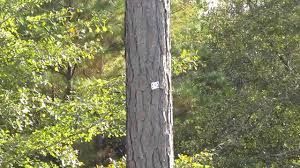 amazing card trick stuck in tree