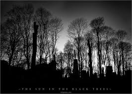 the sun in the black trees by artgapan on deviantart