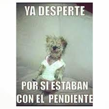 Buen Dia Meme - amonos frases graciosas pinterest memes humour and mexican