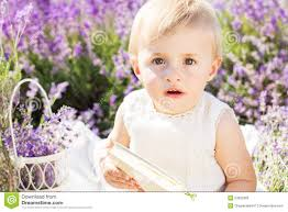 cute child is sitting in field of lavender flowers stock photo