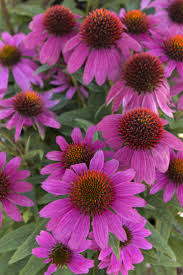 the flowers of summer at 7959 best flowers plants images on plants garden