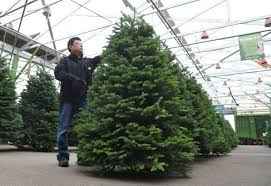 Decorated Christmas Trees Vancouver by Your Guide To All The Best Real Christmas Trees Vancouver Sun