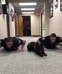 alabama police dog does push ups to catch u0027bad guys u0027 daily mail