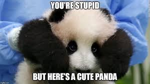 Panda Meme - cute panda meme generator imgflip