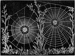 cobweb spray for halloween best 25 spider web drawing ideas on pinterest black widow