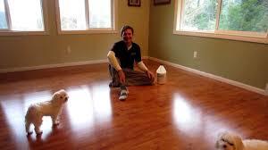 Treatment For Laminate Flooring Dog Slipping Floor Treatment Solution Slipdoctors Floor Grip