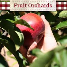 home interiors apple orchard collection apple s your own fruit orchards produce farm and