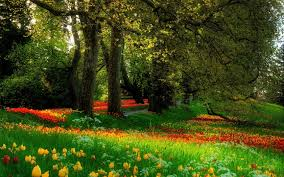images of wallpaper images scenic flower sc