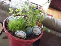 diy herb garden for the kitchen the taylor house