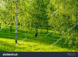 Amazing Pictures Of Nature by Amazing Nature View Green Forest Sunlight Stock Photo 421637530