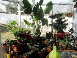 Beautiful House Plants by House Plants Cats Love Arts