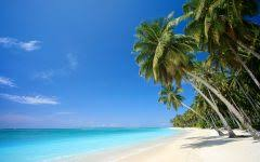 beach christmas tree hd wallpapers i hd images