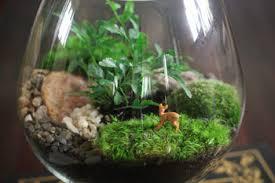 terrarium 101 homegrown