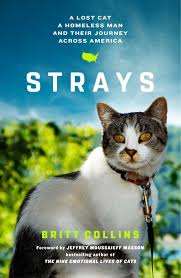 strays a lost cat a homeless man and their journey across