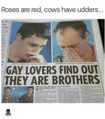 Ute Memes - roses are red cows have udders ute gay lovers find out they are