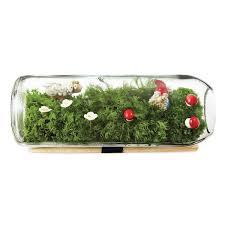 moss terrarium bottle glass terrarium gift uncommongoods