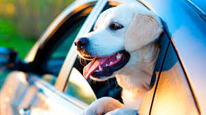 Wisconsin traveling with pets images Air travel guidelines jpg