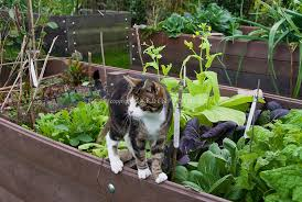 raised bed gardens stock photos images plant u0026 flower stock