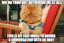 Mad Cat Memes - mad cat meme generator imgflip