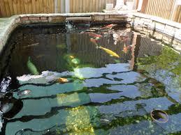 aqua install pond services best aquarium and pond installation