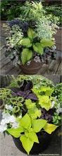 best 25 deck flower pots ideas on pinterest potted plants