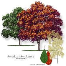 25 unique small ornamental trees ideas on small