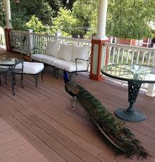 Woodard Outdoor Furniture by Woodard Furniture Always Classic Outdoorlicious