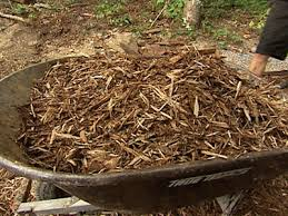 kauai tree care wood chips mulch